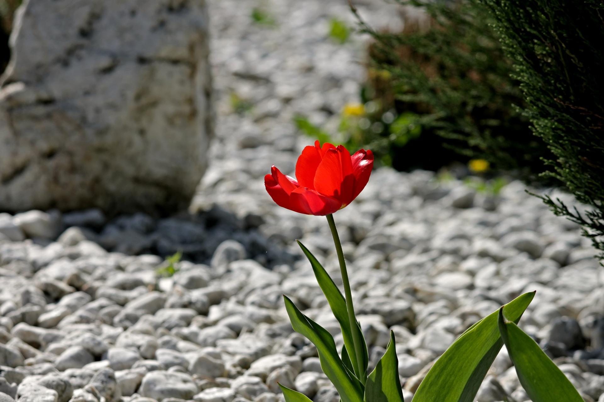Toutes les astuces pour réaliser un beau jardin minéral