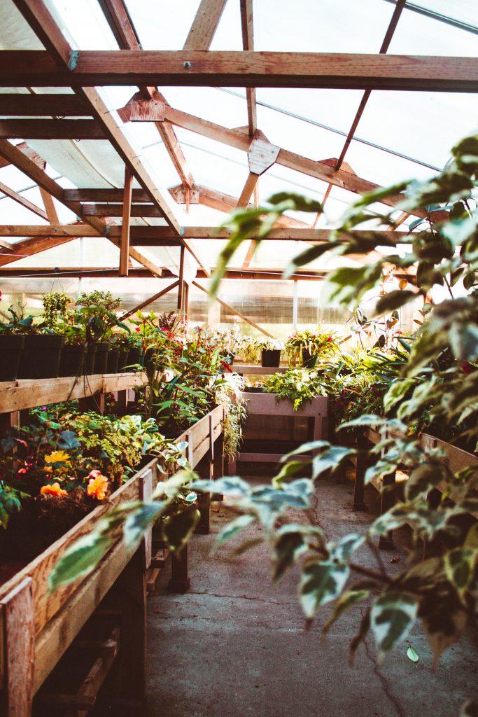 jardin dans une veranda
