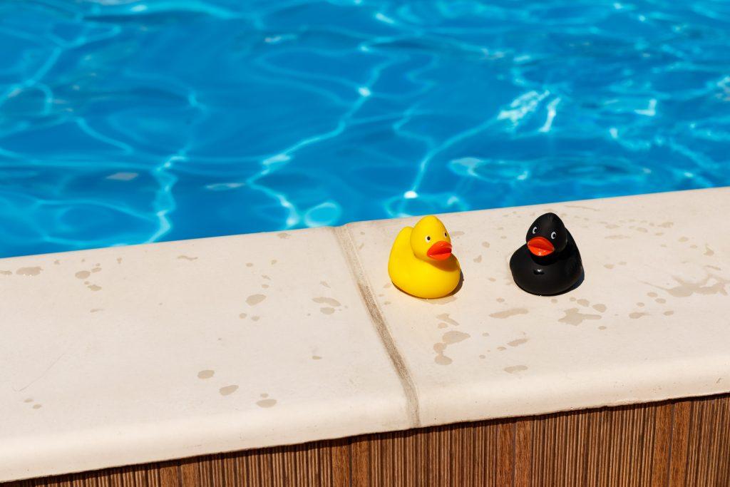 2 canards en plastique au bord d'une piscine