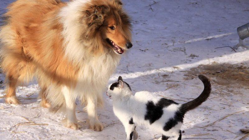 Enlever les poils de chats et de chiens très facilement